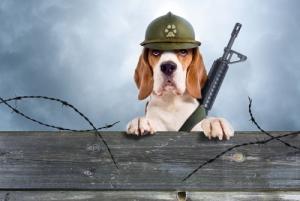 soldier_dog