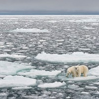 Rising sea levels, endangered species and renewable energy: talking about climate change