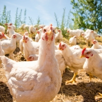 Don't count your chickens: proverbs in English (2)